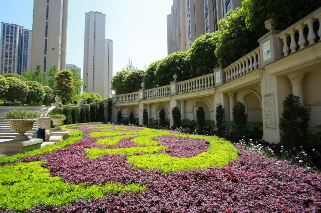 遵义实地蔷薇国际:六年匠心精酿,实地与新蒲共成长-中国网地产