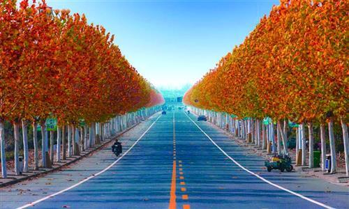 南京456公里农村公路将提档升级-中国网地产
