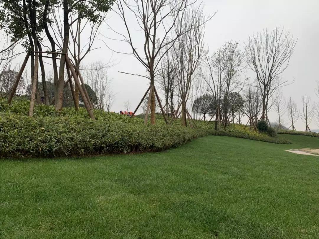 贵阳碧桂园凤凰城:凤凰艺术公园即将开园-中国网地产