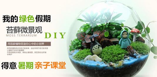 万科金色城市微景观创意绿植diy图片